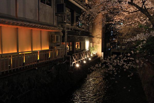 kyouto-sakura_07