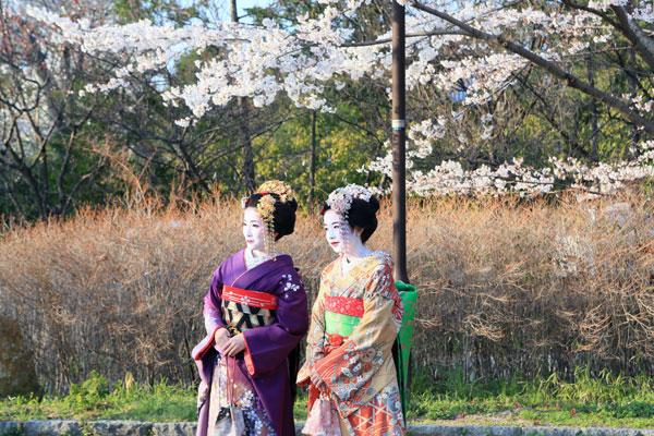 kyouto-sakura_08